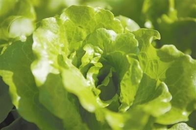 """种在田里的作物可能也在""""吃""""塑料"""
